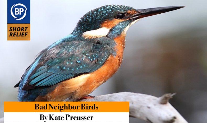 Short Relief: B-b-b Birds, Birds, Birds and So Many Words